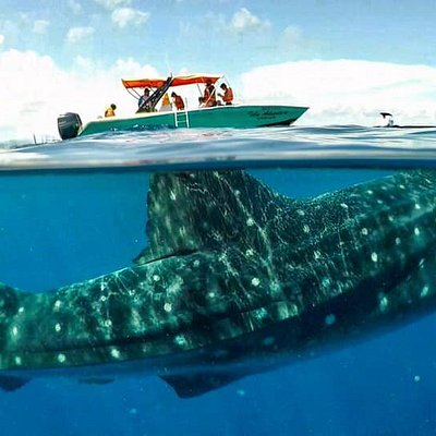 Adventure Boat  with the Biggest Fish