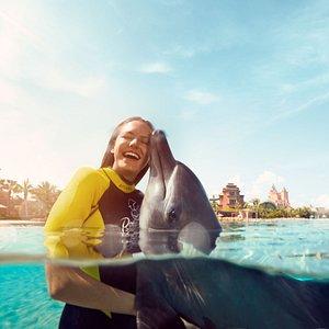 Dolphin Dip & Play