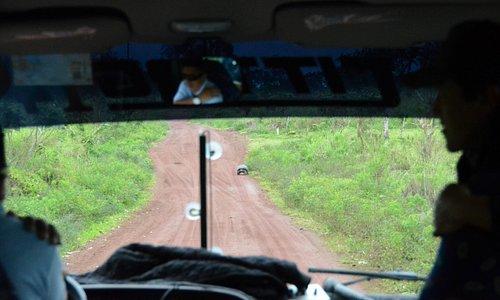 Tortoise Ahead!