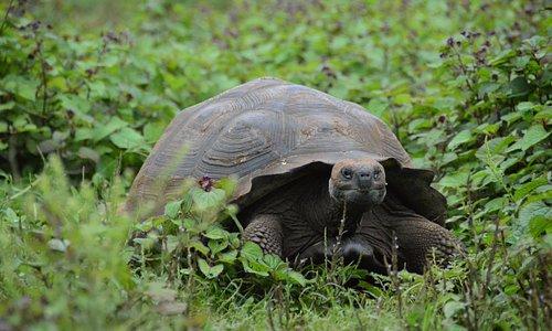 The Tortoises are very picteresque