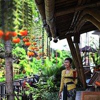 Welcome to the shed bali - ubud