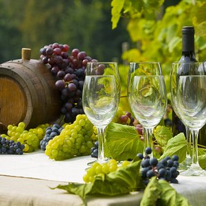 Degustacje na winnicy