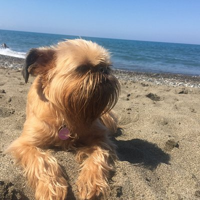 Una bella spiaggia Dog friendly!!