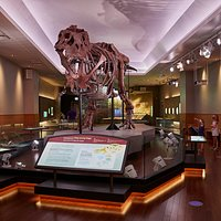 Experience SUE, the largest, most complete and best-preserved Tyrannosaurus rex ever discovered.