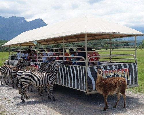 Es como si estuvieras en la sabana Africana, podrás alimentar cebras, jirafas, llamas, ciervos y verás ñus, watusis, bufalos acuáticos y muchos mas!