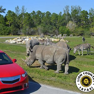 Animals roaming just outside your car!