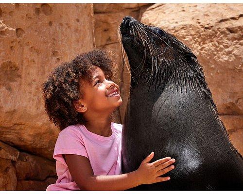Sea Lion Meet & Greet