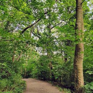 walking through the upper woods
