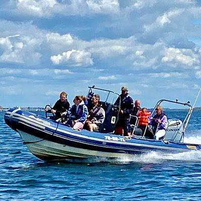 Dolphin RIB & Honda 250HP