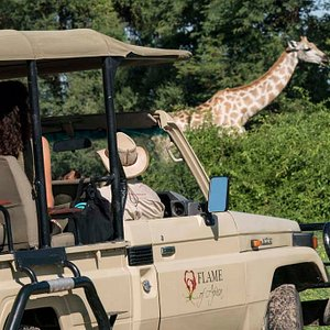 Flame of Africa Game drive along the Chobe River