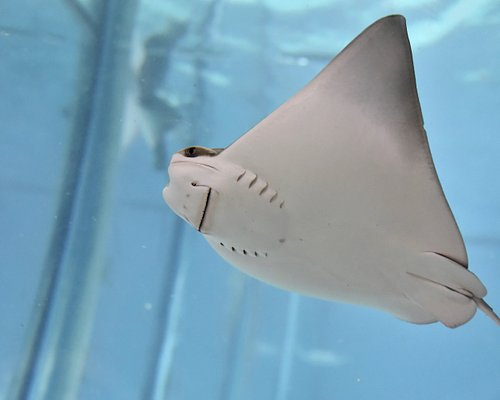 Touch and feed stingrays at Blue Zoo! Experience family fun in Spokane!