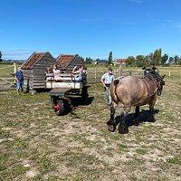 Kinderboerderij Lettenhof