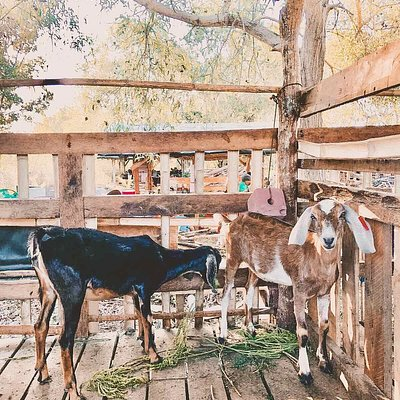 Animals in South Farm