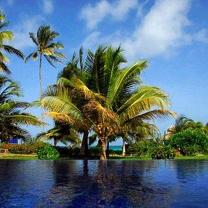 Palms Infinity Pool