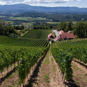 The view over the vineyards at Trška gora