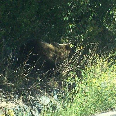 Bear along the road