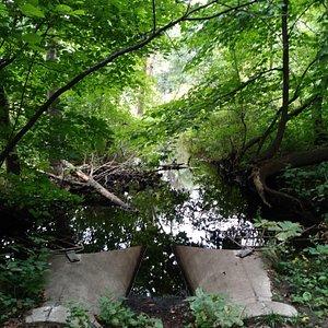 The creek!
