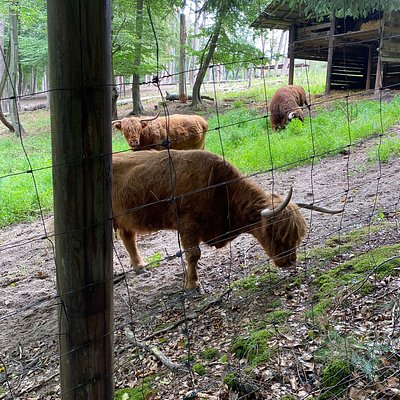 Von Greifvögeln über Schwarzstörche bis hinzu Dammwild, Wildschweine, Thüringische Ziegen und Schottischen Hochlandrinder
