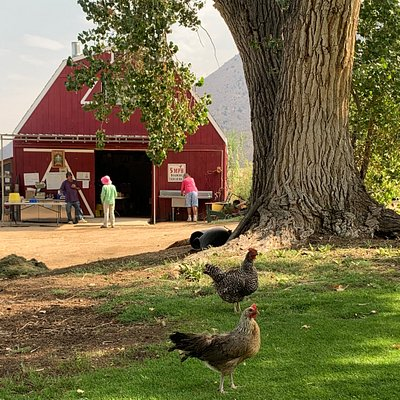 Apple Hill Ranch - certified organic produce