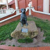 Guide Dog 🦮 Statue.