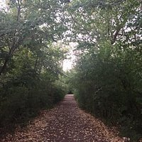Woodchip paved trail