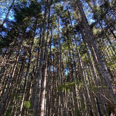 Arboreti sperimentali