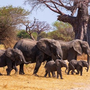 Safaris with Family Rejasse 08 August 2020 For 12 Days