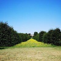 Viale dei Carpini tra Villa Mirabello e Villa Mirabellino, Parco di Monza - Archivio Consorzio Villa Reale e Parco di Monza