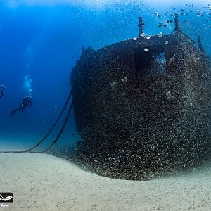 Stern of the wreck with millions of bait fish - ex-HMAS Brisbane