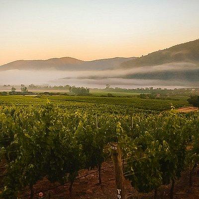 Nuestros suelos vivos y equilibrados dan lugar a uvas de calidad que expresan el máximo potencial del lugar de donde provienen. Lo anterior se traduce en viñedos que trascienden en el tiempo y vinos que son fiel reflejo de nuestros suelos vivos.