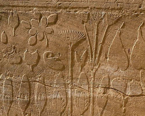 Flowers and plants encountered by the Egyptian Army in Syria