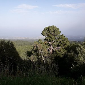 """From the viewpoint at the """"Rifugio Citelli"""" the view sweeps over the dense forest below. In the background the Ionian Sea."""