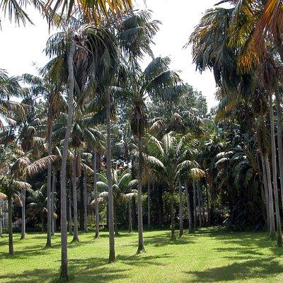 Il giardino, Parco delle Kentie, che insiste sull'area occupata fino agli anni Sessanta dai vivai del Giardino Allegra, deve il suo nome alla presenza in piena terra di 100 esemplari di Howea forsteriana Becc., alti fino a 10 m, che risalgono ai primi del Novecento e costituiscono un ambiente unico nel territorio regionale.