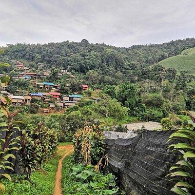 Suan Lahu Farm, at Doi Moi mountain, Chiang Rai province.