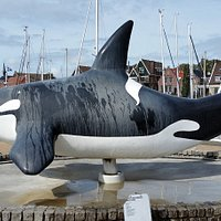 according to old history tales the name of the fishery town of URK comes from the orca. Therefore a model of an adult orca is placedin the middle of the current harbor.