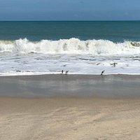 The shore birds
