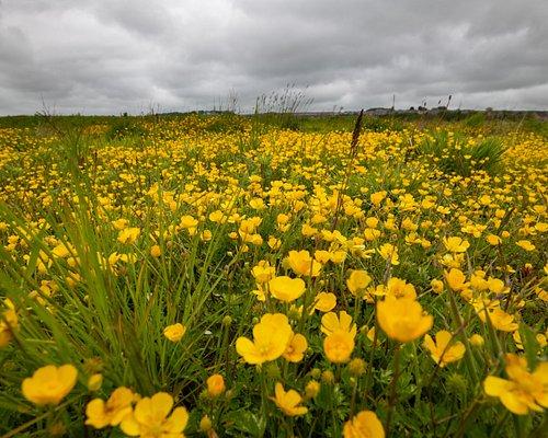 Wildflowers at Ury Riverside Park