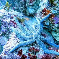 This is a Star fish in the Te Wharawhara Marine Reserve.
