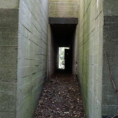 1 van de vele WWII bunkers in dit Staelduinse Bos