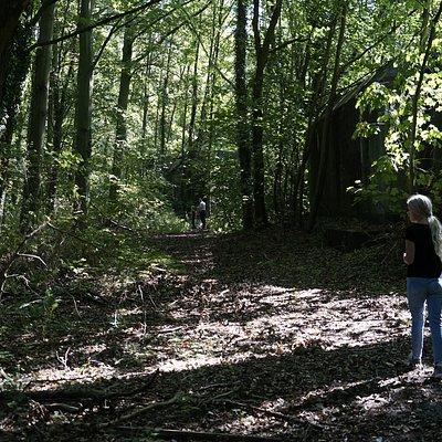 Heerlijk wandelen in het Staelduinse Bos