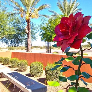 Art Gallery & Gift shop. Features art exhibits, Luncheon Theater series, live paint events & musical performances.