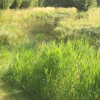 A creek runs through with ducks!!