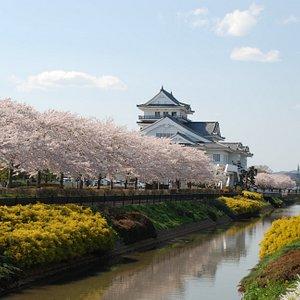桜の悠里館(郷土資料館)