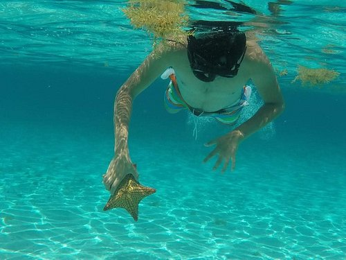 Discover The starfish in Cozumel Mexico