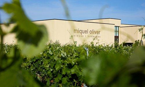 Imagen de los viñedos y bodega