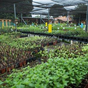 Área de comercialização de mudas de ervas e temperos orgânicos