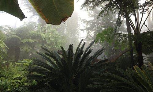 Kohleflora in den Pflanzenschauhäusern - Foto: BGR