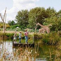 Kinderen op een vlot bij de giraffes | ZooParc