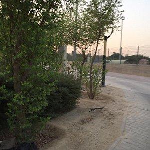 حديقة ومنتزه شركة نفط الكويت  الاحمدي