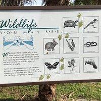 Sign describing the wildlife in the area